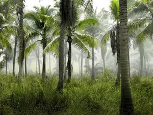 humid forest